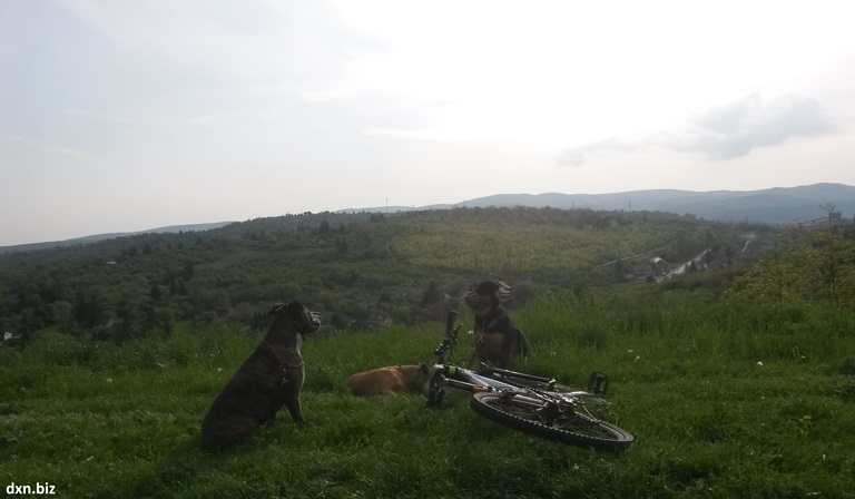 My 3 dogs enjoying the view from Avas hill to Diósgyőr city during dogbiking.