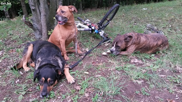 My dogs calmly resting during our bicycle-dogwalk.