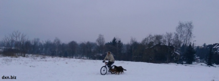 Me riding bike with my dogs in winter in the snow.