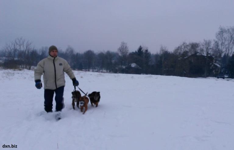 Walking my 3 dogs in deep snow in winter.
