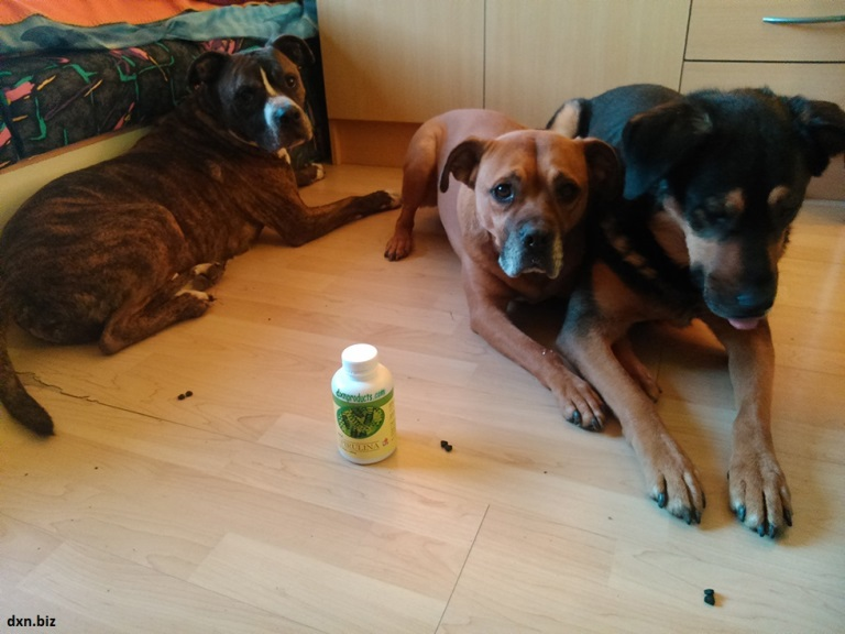 My apartment-dogs lying on the floor in the room guarding a bottle of DXN Spirulina.