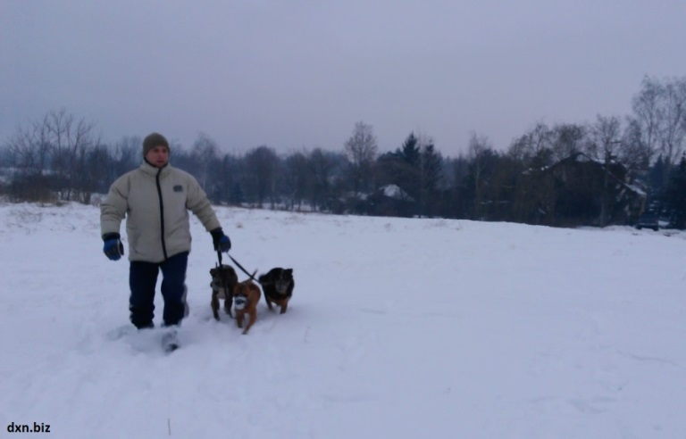 Walking my 3 dogs in deep snow in winter.