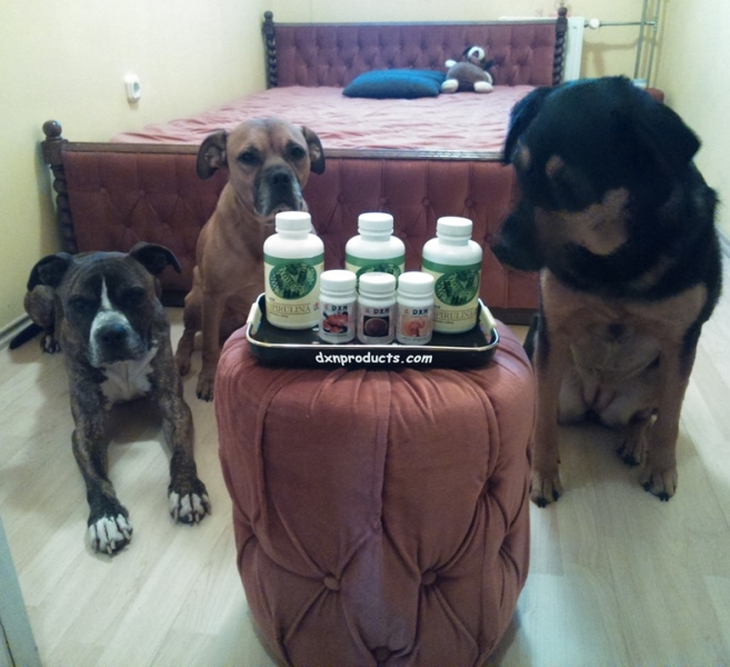 My DXN products are safe among my guard-dogs on duty, LOL! XD