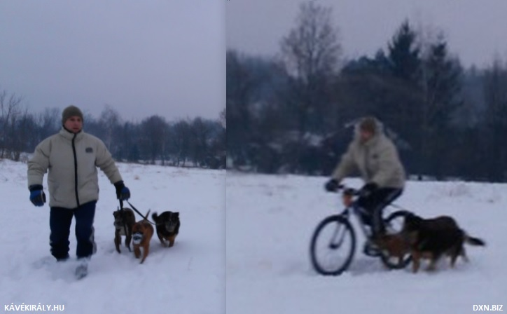 Riding bike with 3 dogs in snow in winter